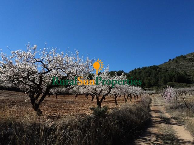 Venta Casas con parcela en Bullas-Murcia