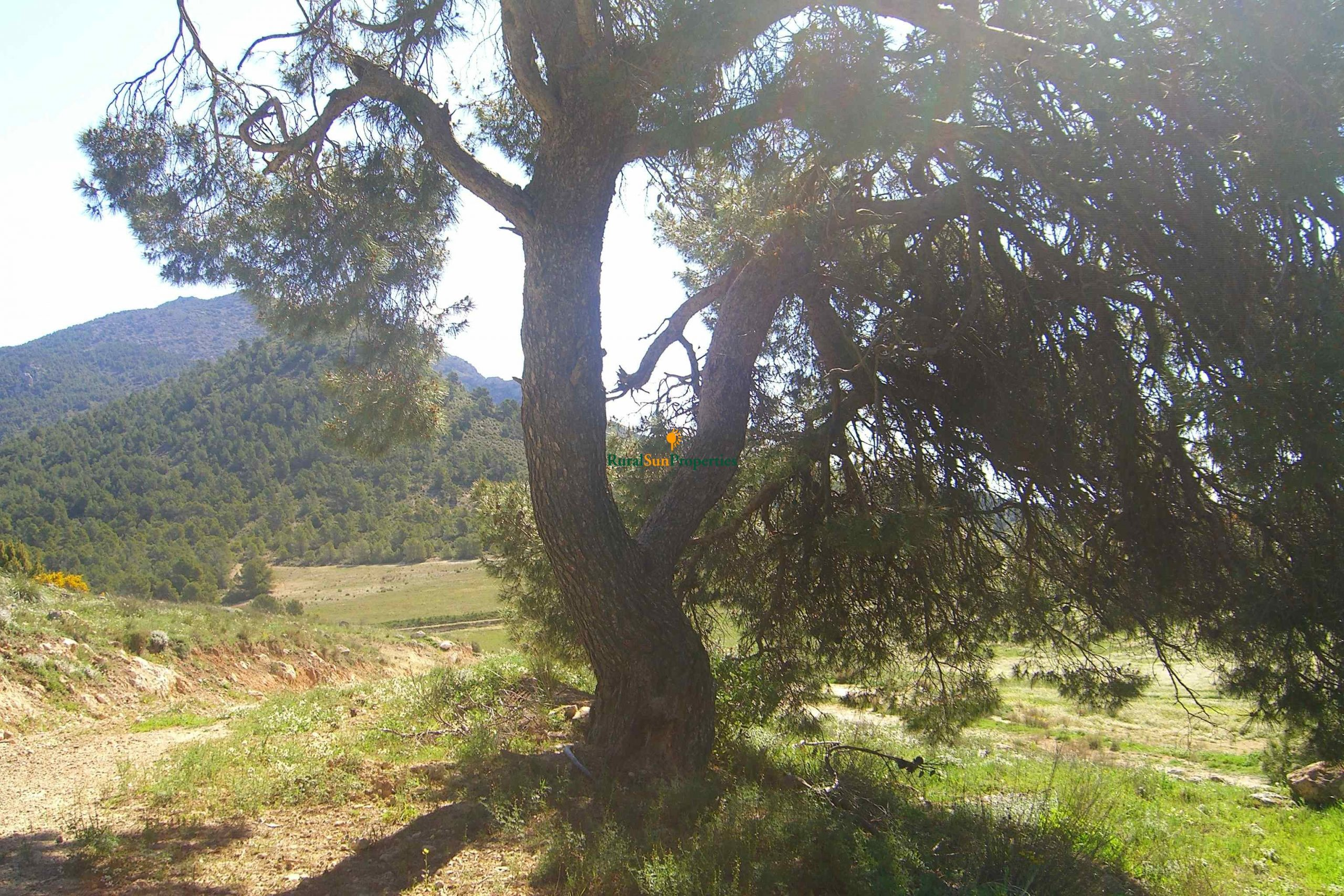 Exclusive mountain Finca with hunting ground in Murcia Sierra Espuña Natural Park.