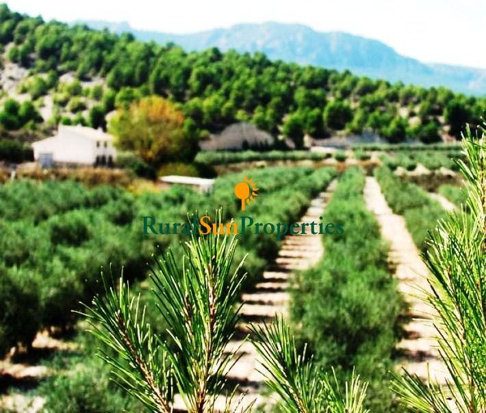 Cortijo en venta en Cehegin con finca olivar 7,8 ha.