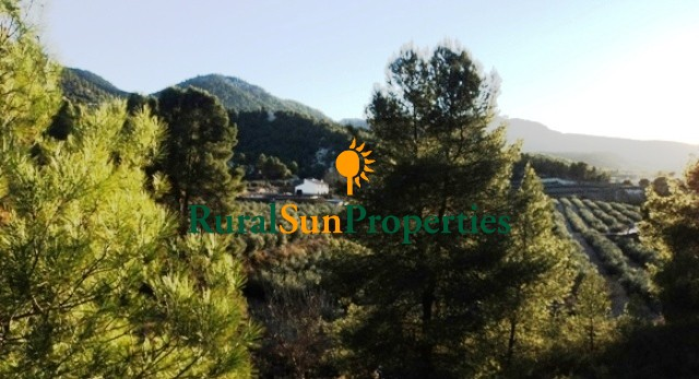 Country property for sale inland Murcia 20 acres olive trees