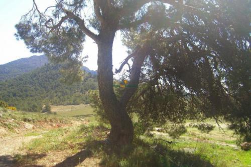 1130_Venta-finca-coto-caza-y-labor-Murcia-Sierra-Espuna-02