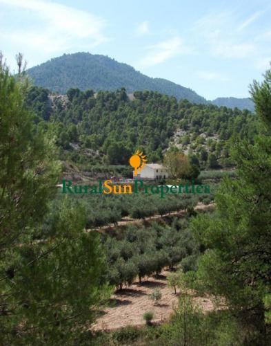 Cortijo con finca olivar 7,8 Has en venta Bullas