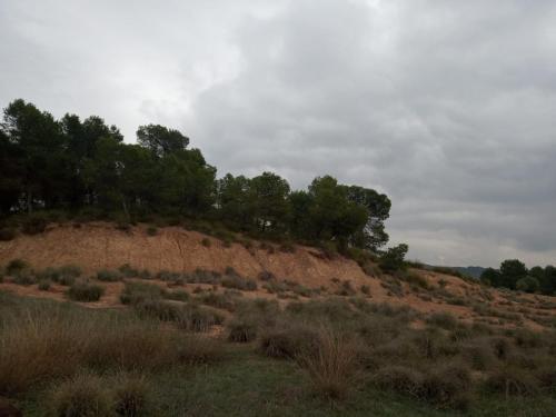 venta-fincas-murcia (1) (1)